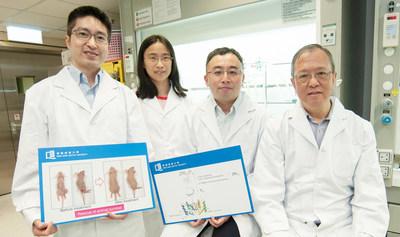 (From left) Dr Lung Hong Lok, Dr Jiang Lijun, Professor Gary Wong Ka-Leung and Professor Mak Nai-Ki developed a novel drug for the treatment of EBV-related cancers such as nasopharyngeal cancer