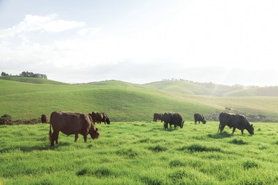 Silver Fern Farms are committed to creating quality products with integrity and ensuring animals live decent lives, as they are raised year-round on beautiful New Zealand pastures with access to clean air and plenty of water.