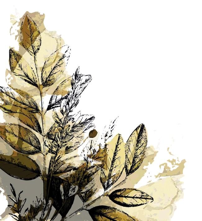 BGG Licorice Plant