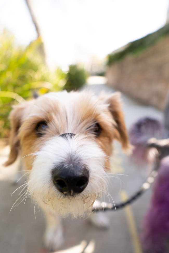 Dog training is recommended for newly fostered or adopted dogs as you trasnition back into work and school