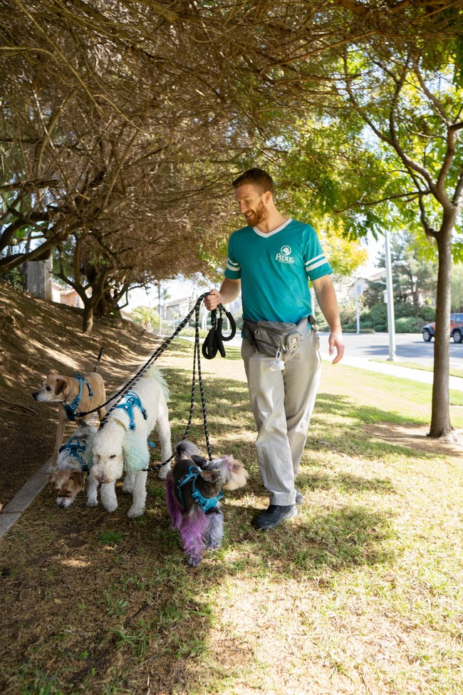 Dog Walking is reccommended to ease the transition for pets staying home alone