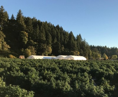 CBD Project | Scio, Oregon