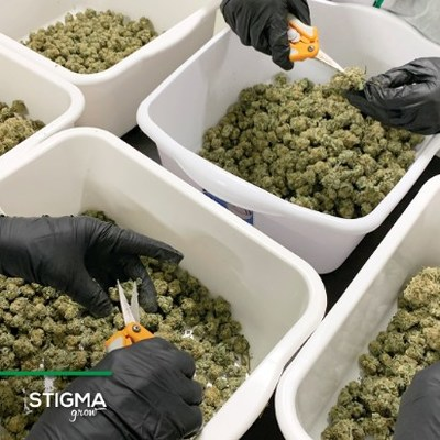 Stigma Grow: Craft Cannon Pre-Rolls. Rolled with hand-trimmed, craft cannabis buds. (CNW Group/CanadaBis Capital Inc.)