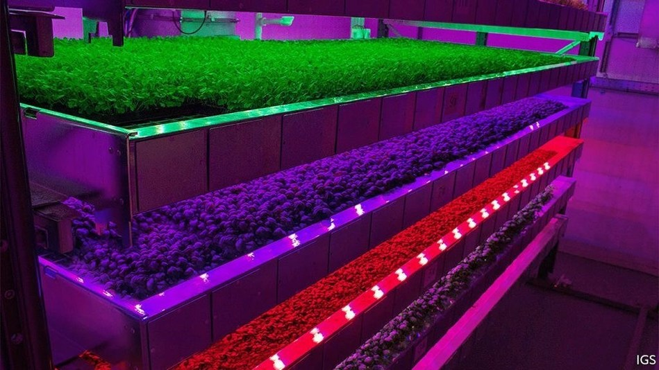 Vertical farms use artificial lighting and carefully controlled climates to grow crops at far higher yields than conventional agriculture. Source: Intelligent Growth Solutions (PRNewsfoto/IDTechEx)