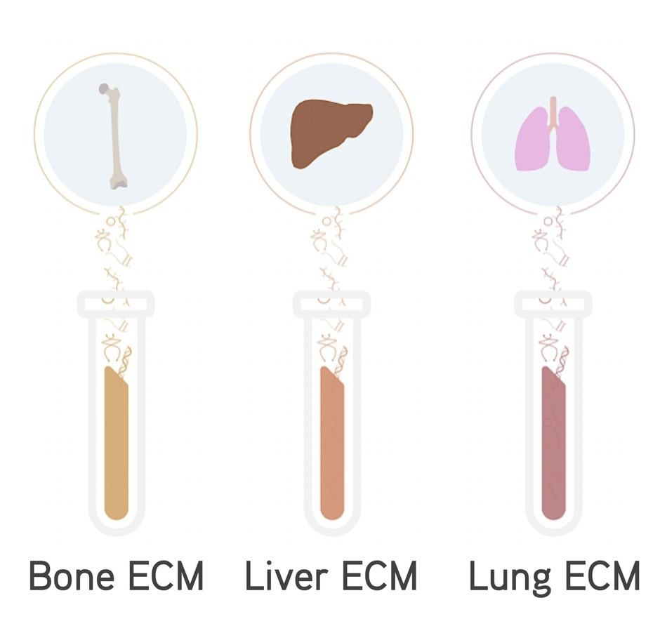 IN SITE™ Metastasis Kit components: site-specific bone, liver, and lung ECM