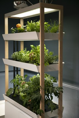 Rise Gardens three-level in-home garden system.  An easy, productive and connected garden with modular components to facilitate growing a wide variety of herbs, greens, veggies, vining plants, micro greens and favorites such as tomatoes and peppers.  Elegant design for any home and suitable for any level of expertise.