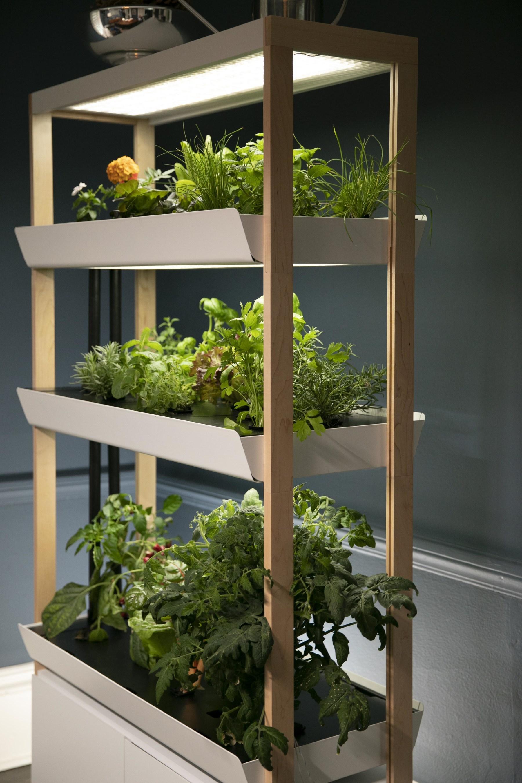 Indoor Gardening Startup Rise Gardens Raises $10.10M Seed Round