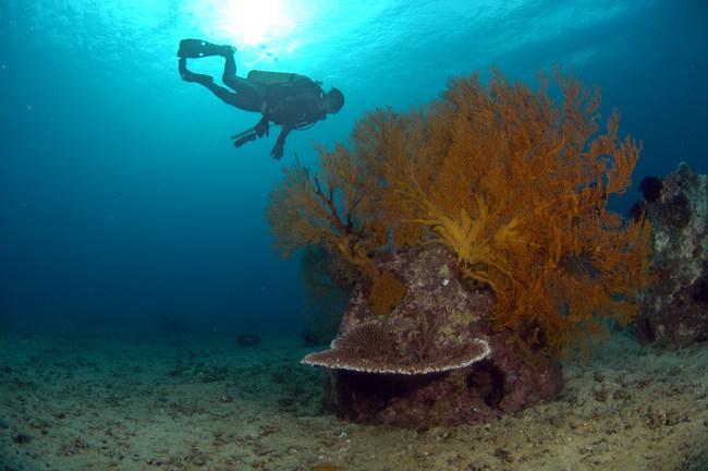Memorial Reefs International