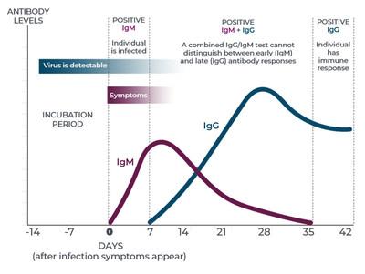 IgM and IgG antibodies