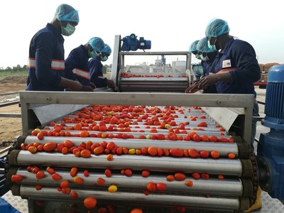 Workers in operation at the GBfoods Kebbi Tomato processing factory