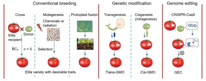 A comparison of genetic engineering techniques. Source: IDTechEx Research, Crop Biotechnology 2020-2030 www.IDTechEx.com/CropBio (PRNewsfoto/IDTechEx)