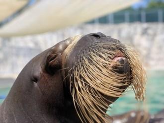 L'Aquarium de Québec et la quasi-totalité de son offre habituelle redeviendront accessibles à l'ensemble de la population dès le 29 juin. Ses milliers de pensionnaires pourront continuer d'émerveiller petits et grands cet été. (Groupe CNW/Société des établissements de plein air du Québec)