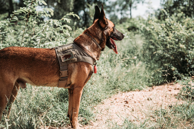 EDGE Brings Wildlife Special Ops Fast-Rope Program to South Africa