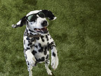 Petco Shares Tips for COVID-19 Safe Summer Fun with Pets