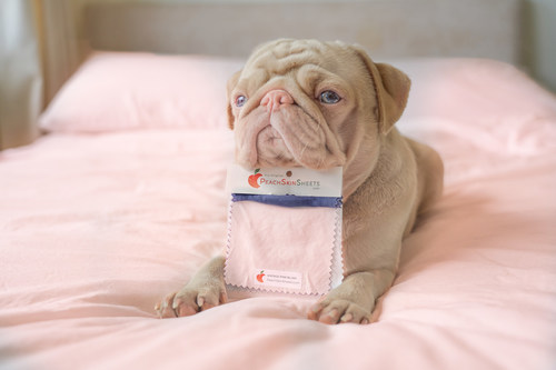 PeachSkinSheets launches their new vintage line with adorably wrinkled and crinkled influencer Milkshake (the one-of-a-kind pink pug with blue eyes, from the United Kingdom).