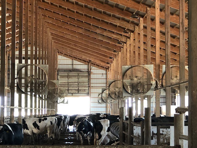 North Harbor Dairy at Old McDonald's Farm in Sacketts Harbor, N.Y., uses large propeller ceiling fans to maintain an 8-9 mph breeze throughout the barn.