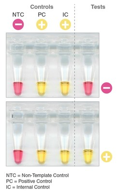 New England Biolabs' SARS-CoV-2 Rapid Colorimetric LAMP Assay Kit Enables Visual Detection of Novel Coronavirus In 30 Minutes
