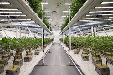 Indoor Cultivation sites using LED with strict odor controls are not permitted in the majority of California cities and counties despite legalization and hefty tax contributions to state and local coffers.
