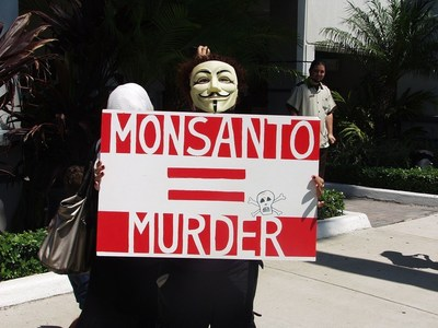 GM crops remain hugely controversial, to the point where (former) GM giant Monsanto is a synonym for corporate evil to many consumers