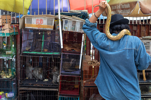 An assortment of animals being kept at a market in Jakarta, Indonesia. Credit: World Animal Protection/Aaron Gekoski (CNW Group/World Animal Protection)