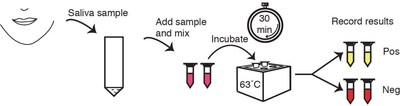 Figure 1: COVI-TRACE On-Site Testing Steps for SARS-CoV-2 Viral Detection