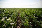 Broad soybean trait portfolio puts weed control in growers' hands