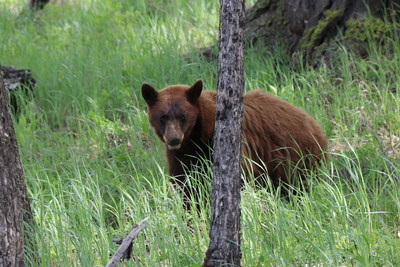A bear market might be coming. - Yellowstone National Park