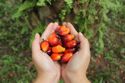 Prohibir el aceite de palma es ineficaz ambientalmente para Europa dice asesor de ONU por My Press
