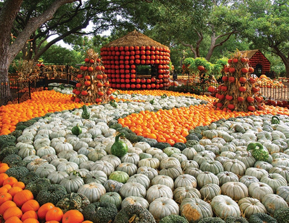 """Autumn at the Arboretum, presented by Reliant, highlights the nationally acclaimed Pumpkin Village featuring four 20-foot-tall decorated pumpkin houses and creative displays fashioned from more than 90,000 pumpkins, gourds and squash. With the theme """"The Art of the Pumpkin,"""" the Dallas Arboretum's popular festival opens on September 19 and runs through November 1."""