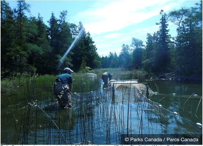 Parks Canada employees set nets to study fish in coastal waters of Fathom Five National Marine Park. (CNW Group/Parks Canada)