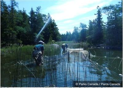 Des employés de Parcs Canada montent un filet afin d'étudier les poissons des eaux côtières du parc national marin Fathom Five. (Groupe CNW/Parcs Canada)