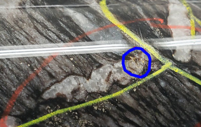 Picture 2: 2020 McFinley Zone Exploration Program – Hole 84L-20-07 – Core Section with visible gold (circled in blue (CNW Group/Battle North Gold Corporation)