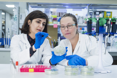 Researchers from the Global Institute for Food Security (GIFS) studying plant samples. Photo credit - Dave Stobbe (CNW Group/Protein Industries Canada)