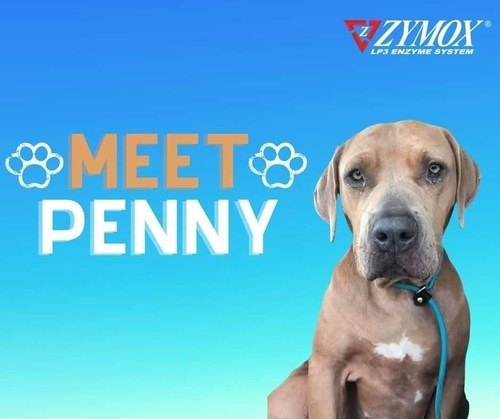 Penny in Need of Loving Home. Contact T.R.A.P.R.S. https://www.facebook.com/TheTRAPRS