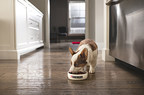 Chew On This: New Survey Shows Many Puppy Owners Don't Know How Long to Feed Puppy Food, And The Reason Why Might Surprise You