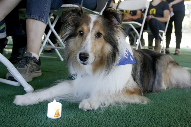 Remember Me Thursday® is held every 4th Thursday of September to shine a light on the millions of pets waiting for forever homes.