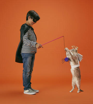 Petco Offers Halloween Bootique And Tips For A Safe Fun Holiday With Pets Sep 9 2020