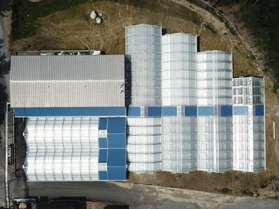 Apothca's cultivation greenhouse in Massachusetts - the first greenhouse in Massachusetts