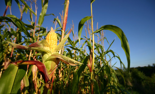 Cargill is supporting farmer-led efforts to adopt and implement regenerative ag practices and systems on 10 million acres of crop land in North America by 2030.