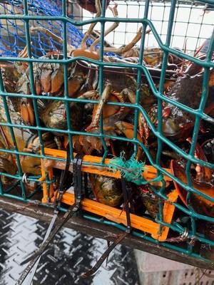 加拿大的渔业可能被摧毁