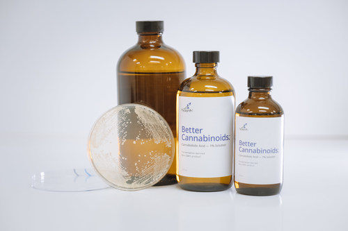 Hyasynth's engineered yeast, shown here on a petri dish, is used to produce CBD and other cannabinoid products. The yeast fermentation process allows production of nature-identical cannabinoids in a more sustainable, consistent, and accessible manner than plant cultivation and extraction.  Hyasynth first to market with CBD in global race to commercialize cannabinoids produced using cellular agriculture (CNW Group/Hyasynth Biologicals Inc.)