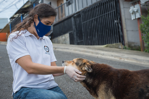 In June, World Animal Protection was in Costa Rica to provide food and care to dogs. Pictured: Dr Melania Gamboa, Veterinary Programs Manager at World Animal Protection was approached by Oso, who was looking to be stroked.  Credit Line: World Animal Protection (CNW Group/World Animal Protection)