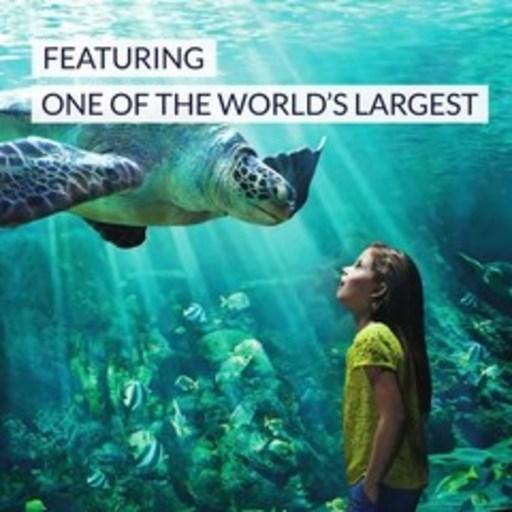 SeaWorld Abu Dhabi Video