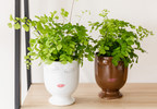 """Plant Lovers Can Build an Indoor Oasis with New and Exclusive Offerings From """"The Plant Shop"""" at 1-800-Flowers.com"""