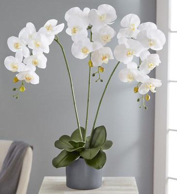 1-800-Flowers.com Faux White Orchid