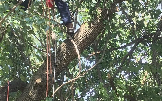 Tree Trimming and Pruning why Keep than safe on Hurricane season