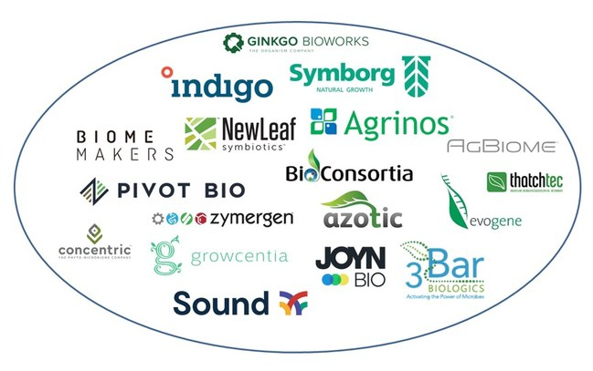 """The start-up landscape for the plant microbiome is growing rapidly. Source: IDTechEx report """"Biostimulants and Biopesticides 2021-2031: Technologies, Markets and Forecasts"""", www.IDTechEx.com/AgBio. Each company shown in this graph is profiled in the report"""