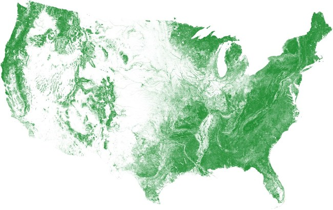 US Tree Map Overview