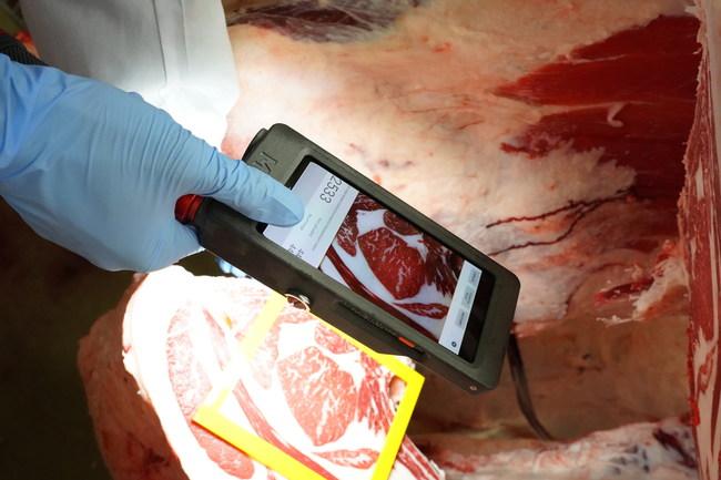 Smartphone carcass grading camera