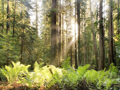 "Humboldt Sawmill Company, LLC and Mendocino Forest Products Company, LLC participated in the recently published USDA Forest Service research paper, ""Cradle-to-Gate Life-Cycle Assessment of Redwood Lumber in the United States."""